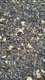 Tree bark chippings. Looking down at garden surface laid with chippings of tree bark with fallen autumn leaves royalty free stock photography