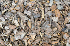 Tree bark chips. Decorative tree bark chips for cover garden ground Royalty Free Stock Photo