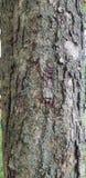 Tree bark Stock Photos