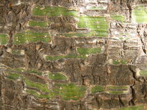 Tree bark close up. Close up of tree bark Royalty Free Stock Image