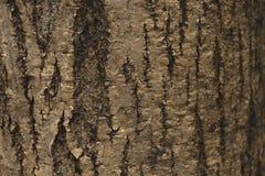 Free Tree Bark Close Up Stock Photos - 95762673