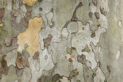 Tree bark close up Stock Photo