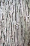 Tree bark. A close up of abstract and textural bark of a full grown tree in a new York state park Stock Photography