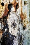 Tree bark. A close up of abstract and textural bark of a full grown tree in a new York state park Stock Photos