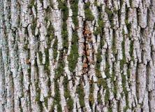 Tree bark Royalty Free Stock Photography