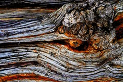 Tree bark close up stock images