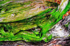 Tree bark close up royalty free stock images