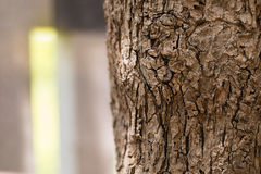 Tree bark close up with blurred green forest behide window  back Stock Photo