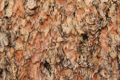 Tree bark. Close up of brown tree bark Stock Photography