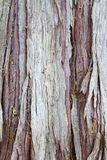 Tree bark. Close up of Cyprus tree bark Royalty Free Stock Images
