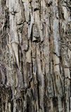 Tree bark close up Royalty Free Stock Photography
