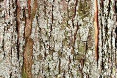 Tree bark close-up moss stock photos