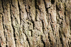 Tree bark close up Royalty Free Stock Photos