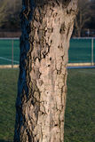 Tree Bark. Close up shot of the Tree Bark Stock Photography