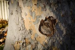 Tree bark close up. On a sunny day Royalty Free Stock Image
