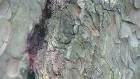 Tree bark close up texture. HD stock footage stock video