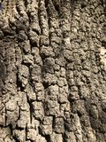 Tree bark close up stock photos