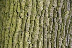 Tree bark. Stock Photos