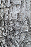 Tree bark. Closeup usable as texture stock photos