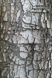 Tree bark. Closeup usable as texture stock photo