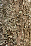 Tree bark closeup usable as texture  background Stock Photo