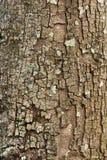 Tree bark closeup usable as texture  background Stock Photo