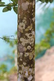 Tree Bark. Colorful bark on tree on the beach Stock Images