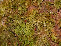 Tree bark covered with green moss and beetles stock image