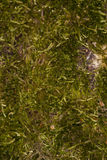 Tree bark covered with moss Royalty Free Stock Photos