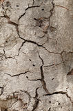Tree bark with cracks Stock Images