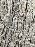 Tree bark cracks and grooves. Close up of tree bark, details of the cracks grooves of the tree growth. Dried old bark. dead tree Royalty Free Stock Photography