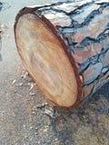 Tree bark in detail. Tree bark in cut tree detail Royalty Free Stock Photos