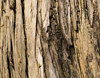 Tree Bark Detail. A detail of a tree Stock Images