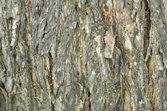 Tree Bark Detail. Bark of a tree detail, perfect to use as a background Stock Images