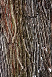 Tree bark detail. The detail of bark, the outer layer of a tree trunk Stock Photography