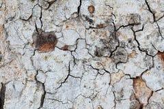 Tree bark detail for background.  Stock Photo