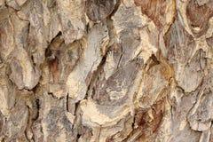 Tree bark detail background. Tree bark detail as background Stock Photos