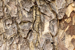 Tree bark detail background. Tree bark detail as background Stock Photography