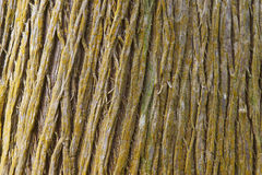 Tree bark detail background in horizontal format Stock Photo