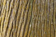 Tree bark detail background in horizontal format. Warm tone Stock Photo