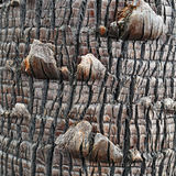 Tree Bark Detail Royalty Free Stock Images
