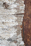 Tree bark detail with lichen formations. Nature textured backgro Royalty Free Stock Photo