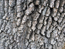 Tree Bark Detail. An old oak tree with bark creates this abstract detail nature image Stock Image