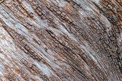Tree bark detail texture. Background Royalty Free Stock Image