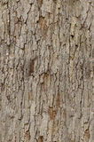 Tree Bark Detail - tileable. Close-up of tree bark. This image is seamlessly tileable Stock Photos