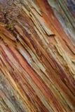 Tree bark. Detail tree bark wooden texture Royalty Free Stock Photo