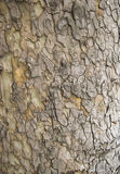Tree Bark. Detailed Texture effect Stock Photos