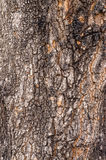 Tree Bark. Detailed.Texture effect.filling the frame. Royalty Free Stock Photo