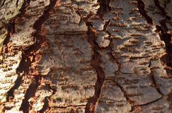 Tree Bark. Detailed tree bark for textures and backgrounds Royalty Free Stock Photo