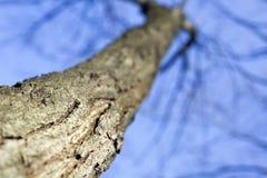 Tree bark details Stock Photos